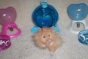 CC hamster