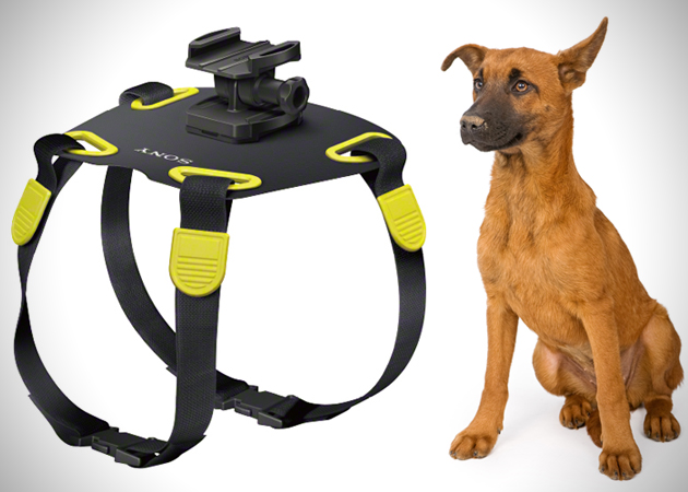 Sony-Action-Camera-Dog-Mount