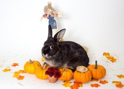 Arlington bunny 2