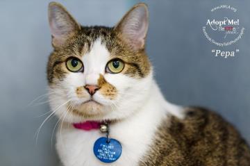 Arlington cat