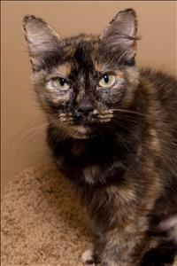 GBHS cat Melanie