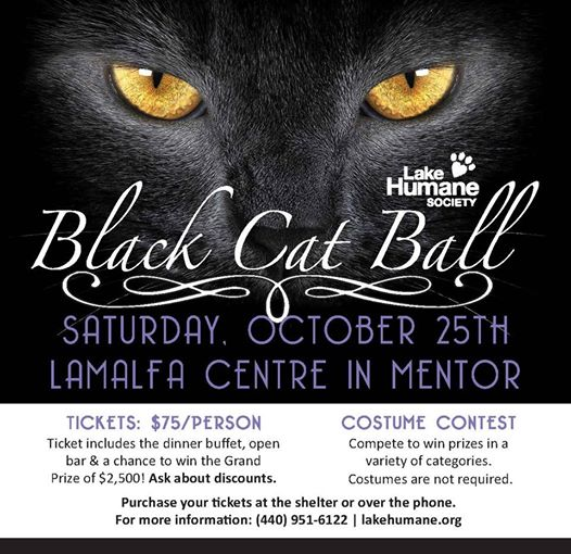 Lake Humane Black Cat banner