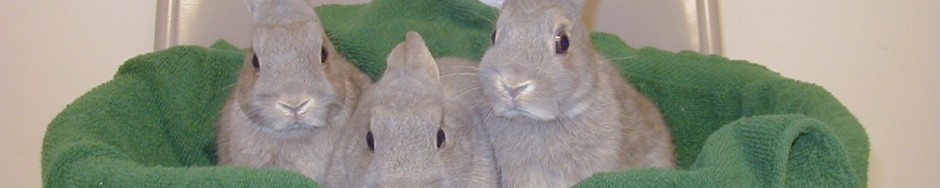 Rabbit Advocates banner