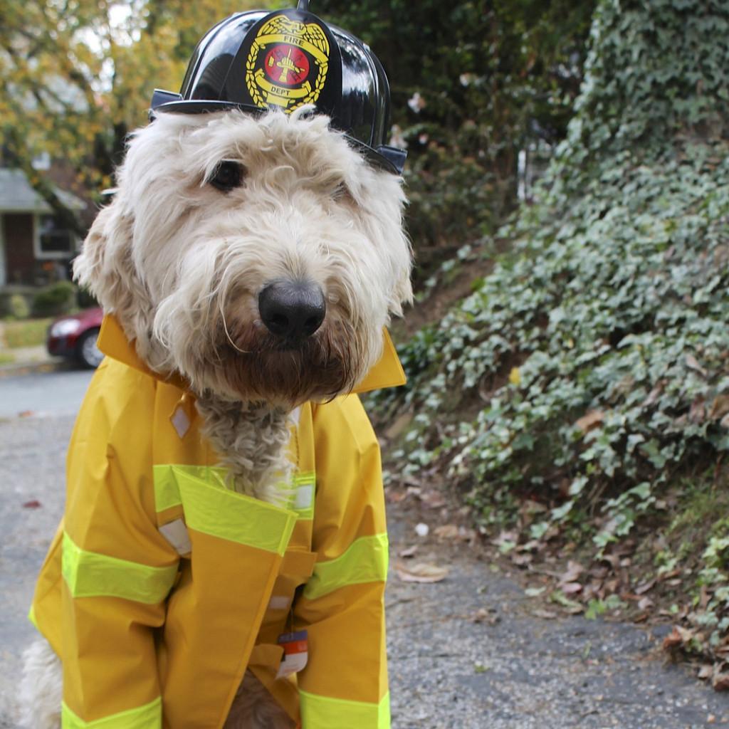 dog-costume-e1412097535187