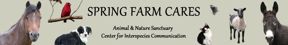 springfarm banner