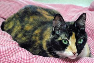 springfarm cats_daisy