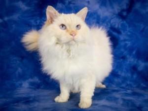 Boulder cat 1