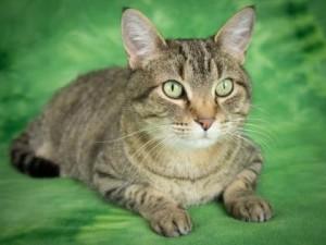 Boulder cat 2