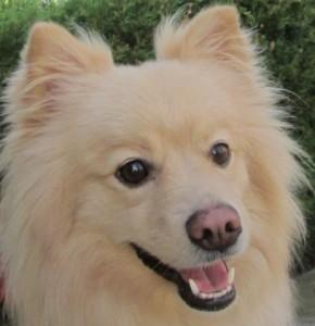 Sacramento dog Oliver