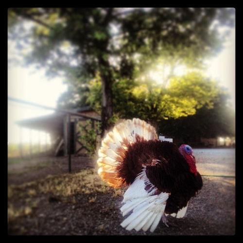 Harvest Home Animal Sanctuary | The latest news from PetravelR com