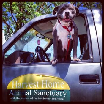 HarvestHome truck