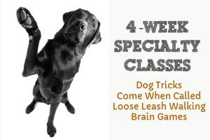 Loouisiana 4-week-specialty-classes_edited-1
