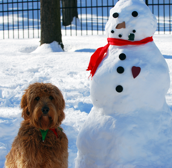 Bow Wow Blizzard Camp! | The latest news from PetravelR com