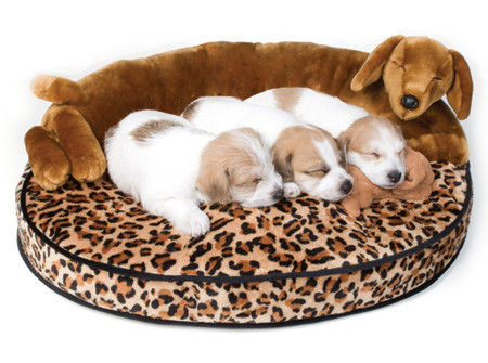 heatable dog bed