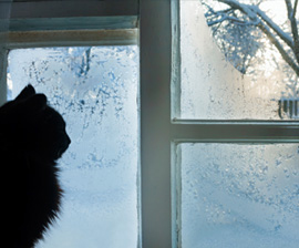 HSUS cat-snow-window