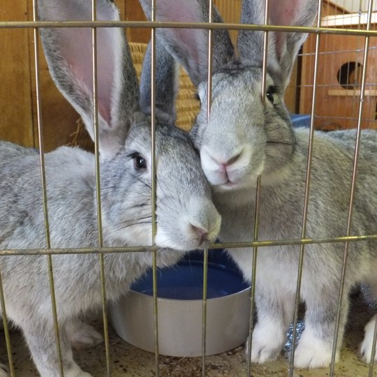 Sweet Binks rabbit pair