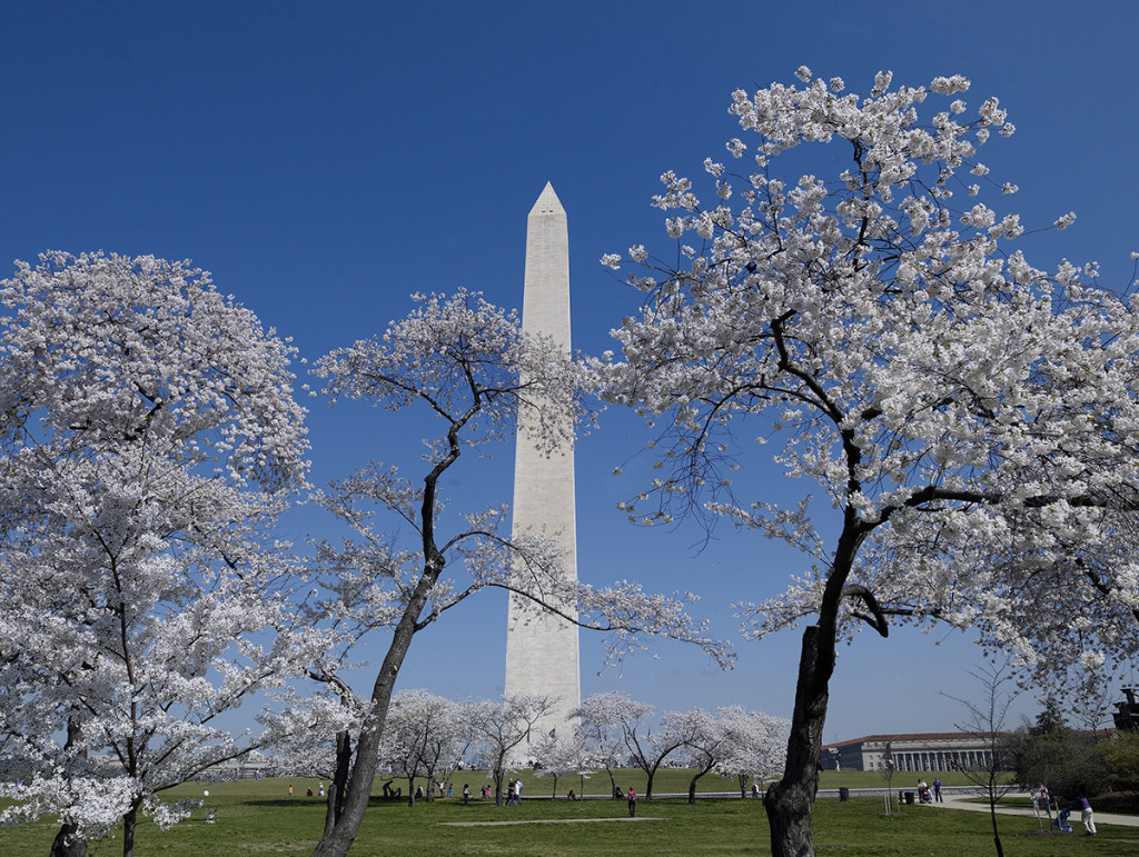 Cherry blossoms monument NPS