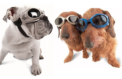 Doggles 1