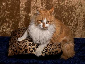 Santa Fe cat 1