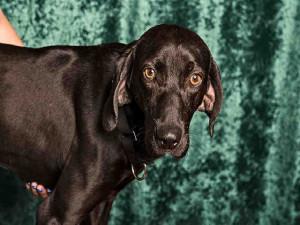 Santa Fe dog 1