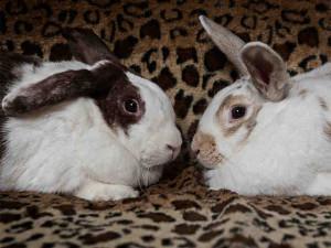 Sante Fe bunnies