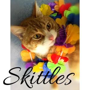 YVAS MT cat Skittles