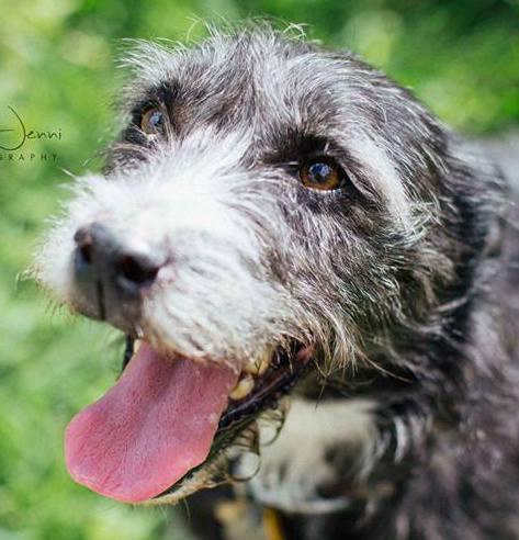 YVAS MT dog Macy