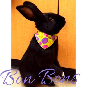 YVAS MT rabbit bon-bons