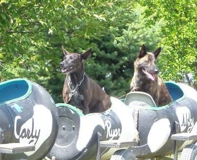Dog Days Bloom-train