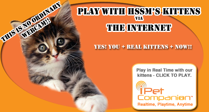 HSSM play with kittens