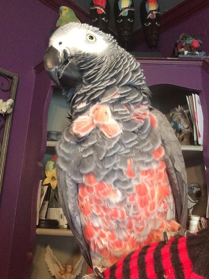 bird | The latest news from PetravelR com