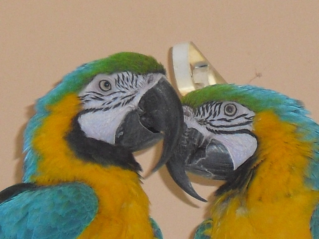 SCBR Back room Birds 002