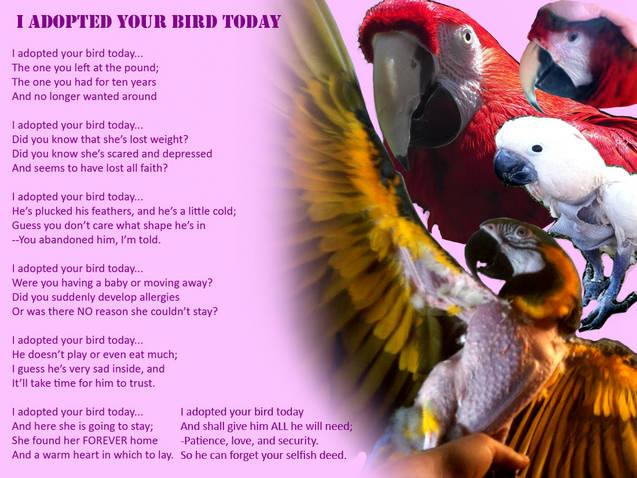 SCBR I adopted your Bird