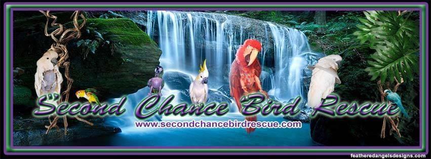 SCBR banner