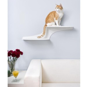 cat clouds shelf 1