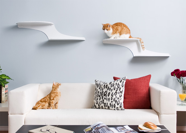 cat clouds shelf 3