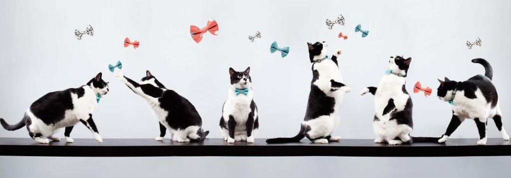 Cat Bow Ties-group 2