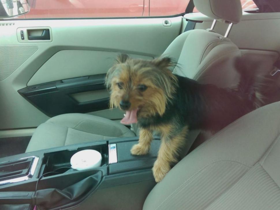 Yorkie Locked In Hot Car Photo Courtesy Of WXIA