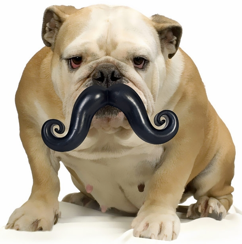 humunga-stache-large