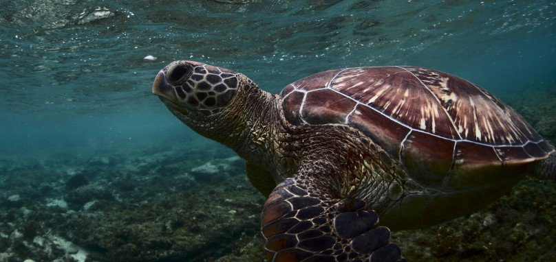 World Turtle Day! | The latest news from PetravelR com