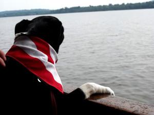 Canine Cruise Potomac 1