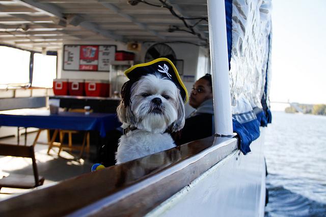 Canine Cruise Potomac 2