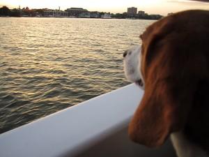 Canine Cruise Potomac 3