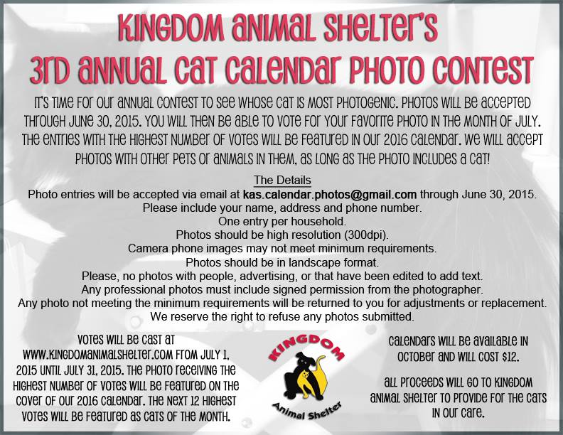 Kingdom Cat contest