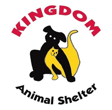 Kingdom Cat logo