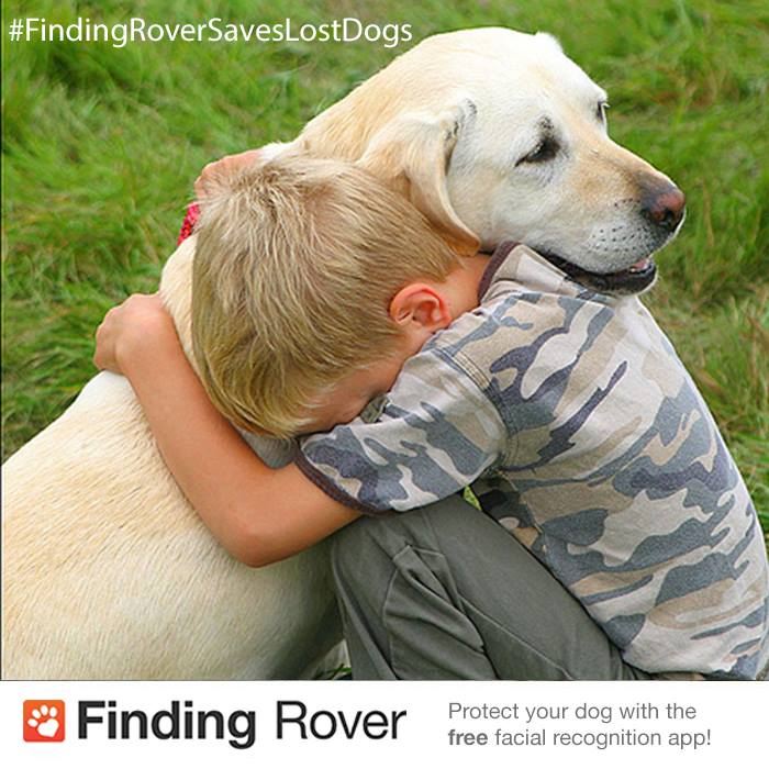 Finding Rover dog with boy