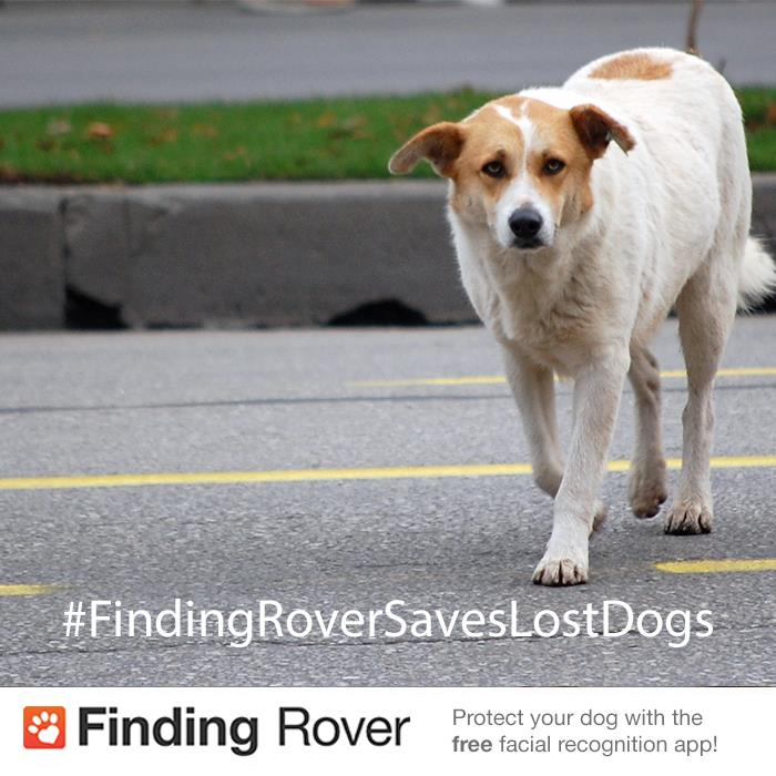 Finding Rover dog