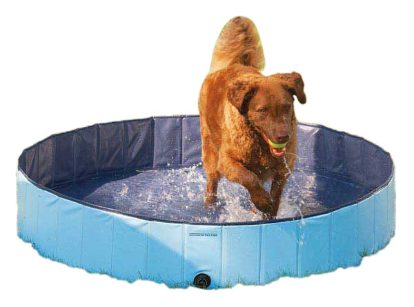 Guardian dog pool