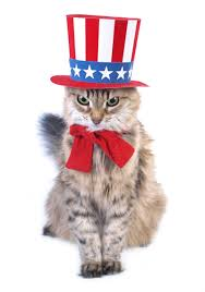 Uncle Sam cat