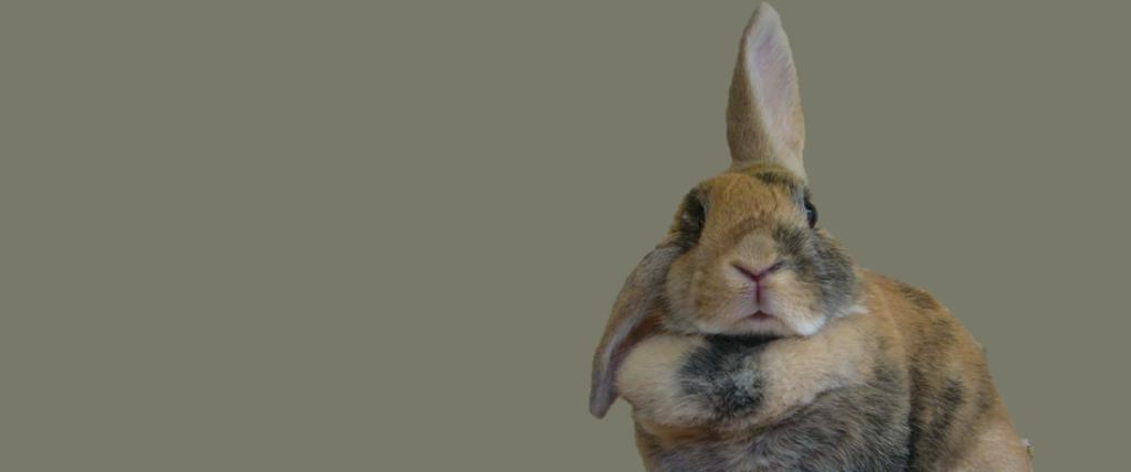 eastern shore rabbit rescue 2